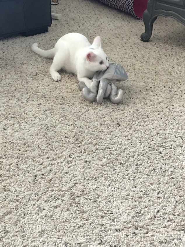 Stormie Attacks Octopus